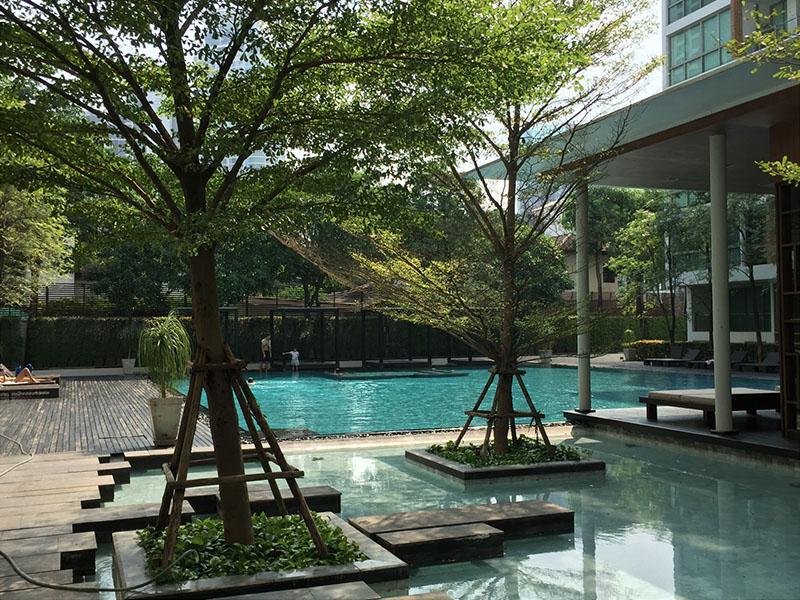 Ficus Lane